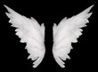 canvas print picture - wings