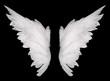 wings - 68306776