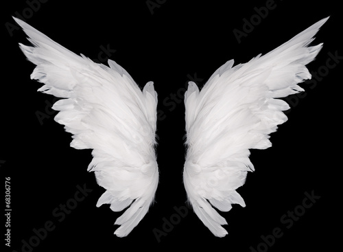 canvas print picture wings