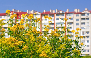 yellow flowers near the building