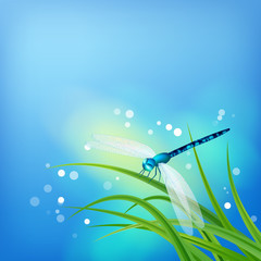 Dragonfly on Grass Blade