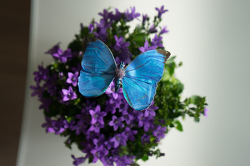 Schmetterling Bouquet