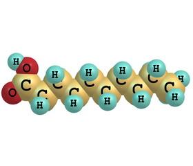 Decanoic (capric) acid molecule isolated on white