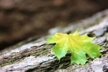 Blatt auf Baumstamm