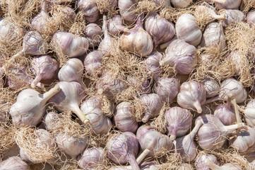 garlic laying as a background