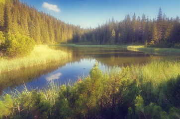 Lake in a mountain forest