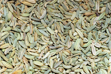 Semi di finocchio - Foeniculum vulgare