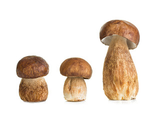 Boletus, mushroom isolated on white background