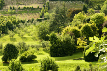 green orchards in high town, Bergamo
