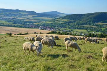 Schafherde in der thüringischen Rhön (Diedorf)