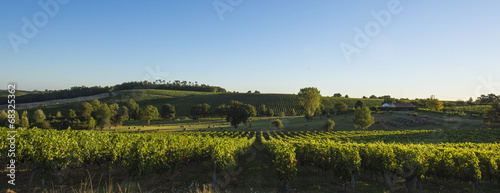 Aluminium Cultuur Vineyard south west of France, Bordeaux Vineyards, Saint-Emilion