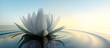Leinwanddruck Bild - Lotusblüte im See