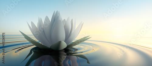 Leinwanddruck Bild Lotusblüte im See