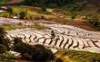 Rice fields on terraced.