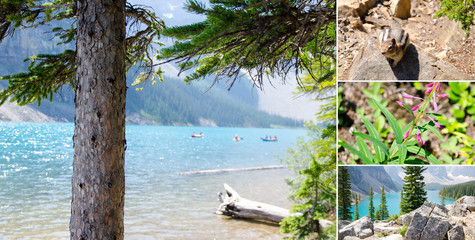 Morain Lake canada Mosaic