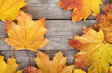 Fototapety Colorful autumn maple leaves