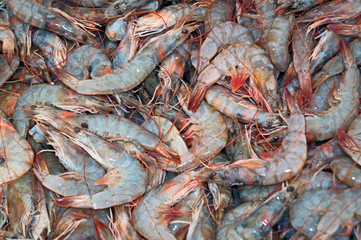 fresh shrimps from the Aeagean sea for cooking