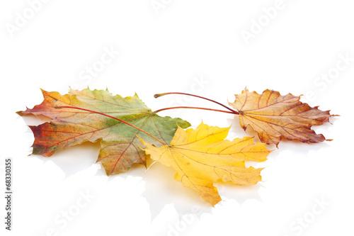 Papiers peints Vegetal Colorful autumn maple leaves