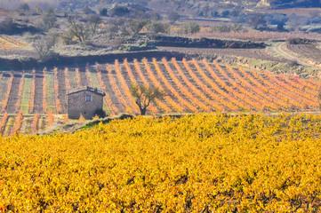 Viñedo en otoño, La Rioja (España)