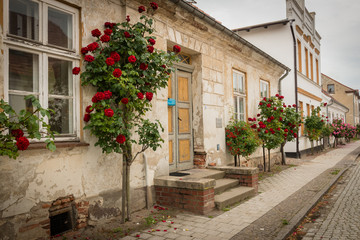 Roses at the Facades of Putbus, Rügen, Baltic Sea, Mecklenburg-