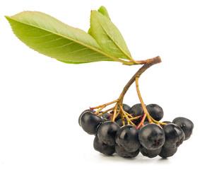chokeberry isolated
