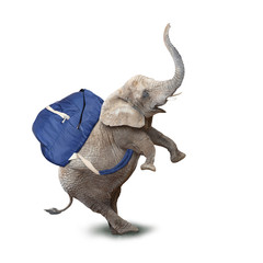 Funy baby elephant with backpack going to school.