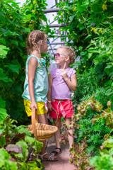 Cute little girls collect crop cucumbers in the greenhouse