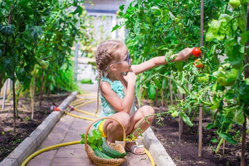 Cute little girl collects crop cucumbers and tomatos in