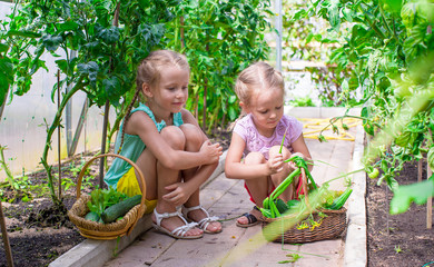 Cute little girls collect crop cucumbers in the greenhouse