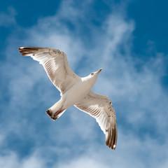 Морская чайка парит в небе