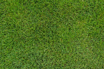 Golf Fairway Grass Close Up