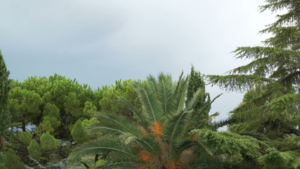 Stormy sky, palm trees and the blue mountains