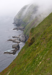 Cliffs of Cape St. Mary's in Newfoundland