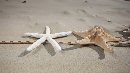 Starfishes, seashell and rope on the beach. HD motorized slider