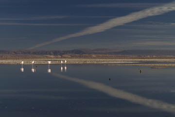 flamingos and sky reflected in the lake (Andes in Chile)