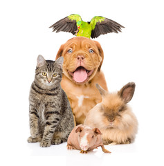 Group of pets together in front
