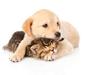 baby puppy dog and little kitten together. isolated on white bac