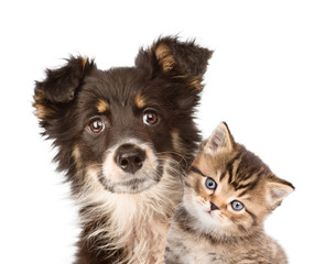 closeup puppy dog and kitten together. isolated on white backgro