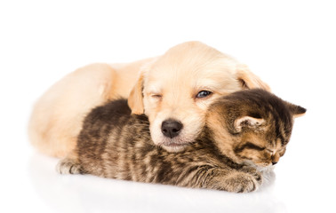 baby puppy dog and little kitten sleeping together. isolated on