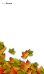 foglie autunno, foglie secche