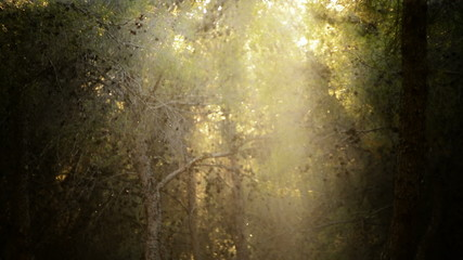 Sunrays in forest with particles moving