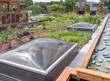 Green Roof in urban setting
