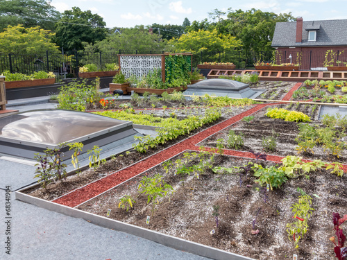 Tuinposter Tuin Green Roof in urban setting