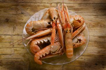 Nephrops norvegicus Norway lobster Scampi Kaisergranat