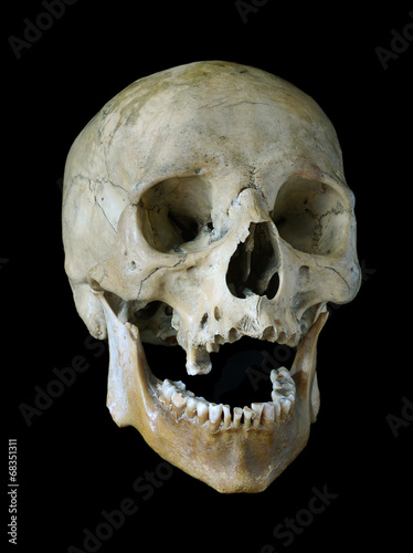 canvas print picture Old skull.