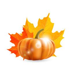 pumpkin and maple leaves  - illustration