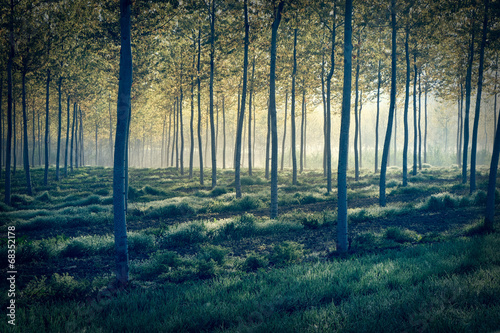 Foresta misteriosa