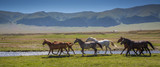 Fototapety Horses on a summer pasture