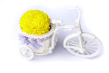 Yellow Blossom Asteraceae Flowers in vase on Mini tricycle
