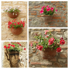 various petunias flowers in pots on stonewall , Tuscany, Europe